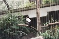 1995 Bronx Zoo 13