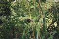 1995 Bronx Zoo 24