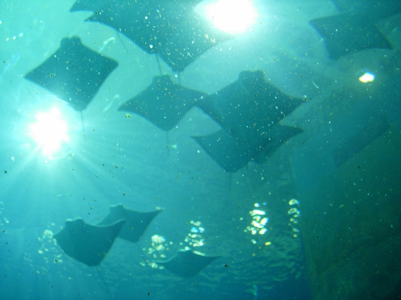 ga-aquarium 028