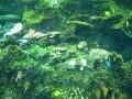 ga-aquarium 052