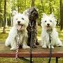Daisy, Brownie and Marley