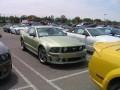 Roush Mustangs  0009