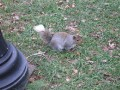 White Tailed Squirrel!!!
