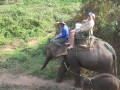 Mae Ping Elephant Camp near Chiang Mai in Northern Thailand Day 12 Feb 23-2006 (27)