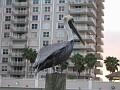 Pelican in the Waterway of Ft. Lauderdale, Florida.
