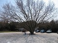 Pruning the Swamp Maple Tree in the Rear of my Home/Office March 22nd, 2007 COMPLETE!!!