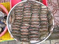 Live Crabs,,,  stacked so that they cannot move or climb out...