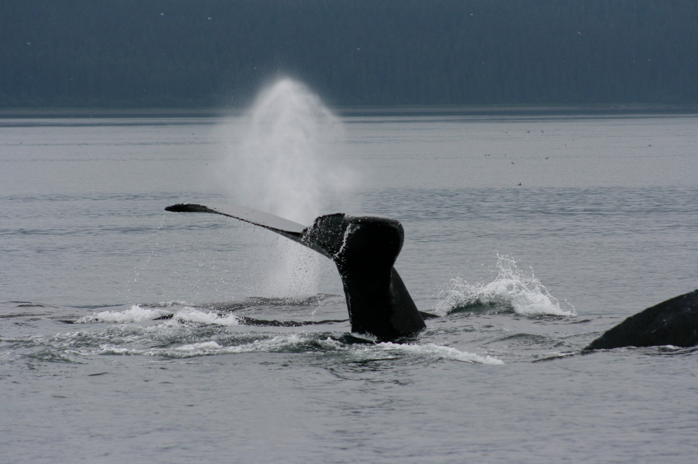 Whales blow and show their tales