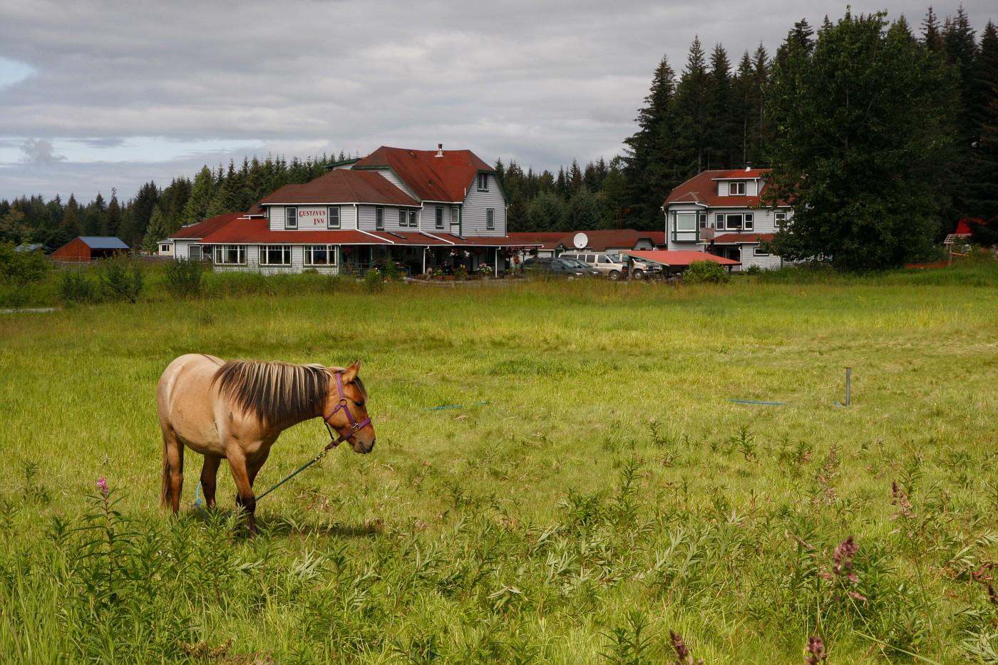 Gustavus Inn pasture