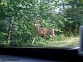 Att få se några djur var lättare sagt än gjort (hjort...)