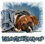 1Welcome2theGroup-blujeanpup-MC