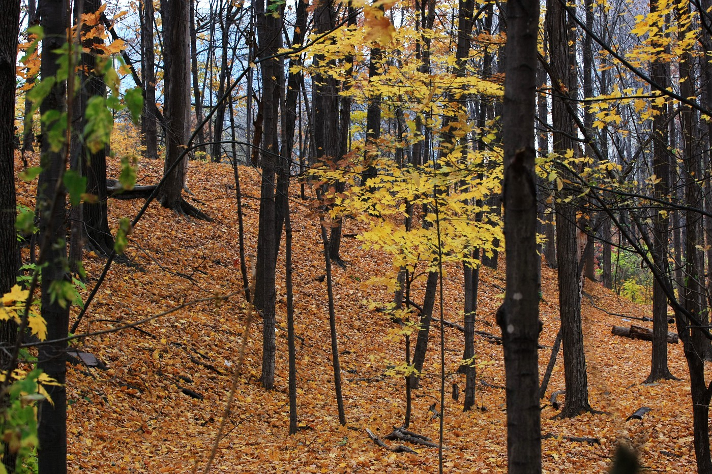 2010-10-30-0001-autumn