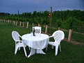 Relaxing at Natali Vineyard with Friends!!! (17)