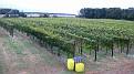 Natali's Vineyard October Fest 10-17-09 (11)