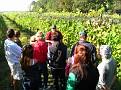 Grape Picking at Natali's Vineyard 10-21-09 (10)