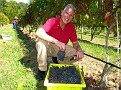Grape Picking at Natali's Vineyard 10-21-09 (30)