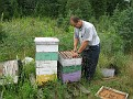 Tim Schuler, our NJ State Apiarist, doing an inspection. The Corresponding VIDEO is here ---> http://public.fotki.com/GaryGS1/family-farm/beekeeping-1/jerseycapebeekeeper/jerseycapebeekeeper-77.html