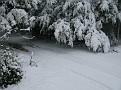 Snow Storm of December 19 2009 (107)