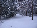 Snow Storm 1-30-2010 (7)