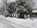 Snowstorm 2-6-2010 (7)