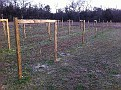 Tensioning up Trellising, Pruning and Enjoying My new Vineyard on a Great Sunny Fall Day.  Grapes / 3 years???  24 vines each of Barbera, Cabernet Sauvignon and Merlot.