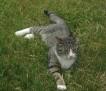 Grass Kat