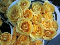 Roses, Byward market