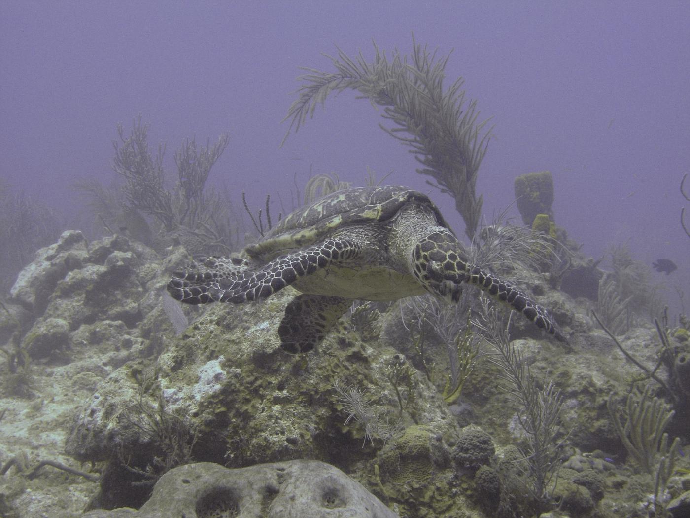 Grand_Cayman-38.jpg